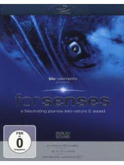 Blu/Elements Project - Forsenses