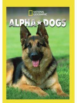 Alpha Dogs (2 Dvd) [Edizione: Stati Uniti]