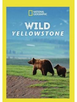 Wild Yellowstone [Edizione: Stati Uniti]