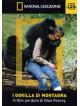 Gorilla Di Montagna (I)